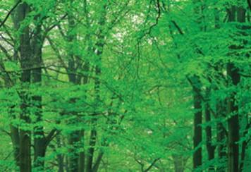 imagen de Calidad ambiental